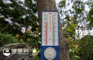 熊猫滚滚夏天咋避暑?冰蛋糕空调房安排上