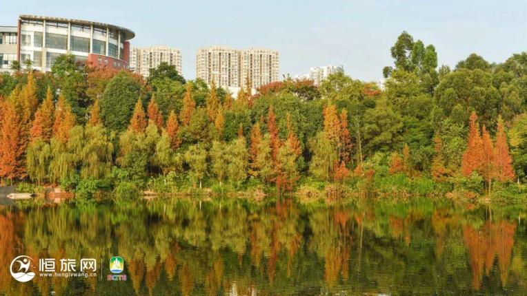 不用去川西 这里就有一片美到极致的彩林