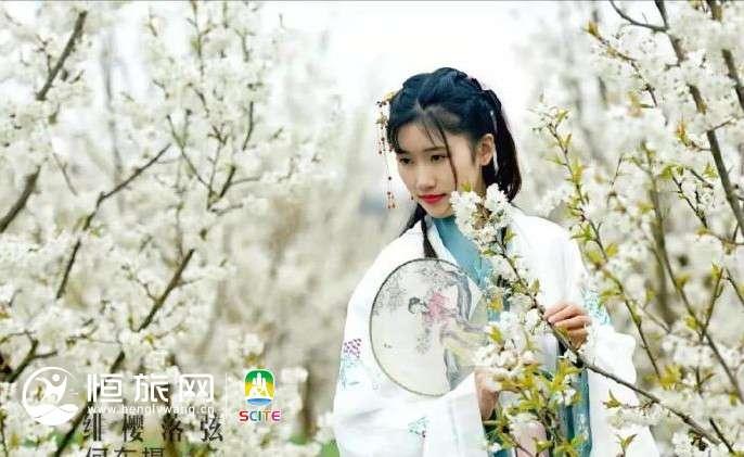 来乐山犍为水晶樱桃园,赏漫天樱桃花!